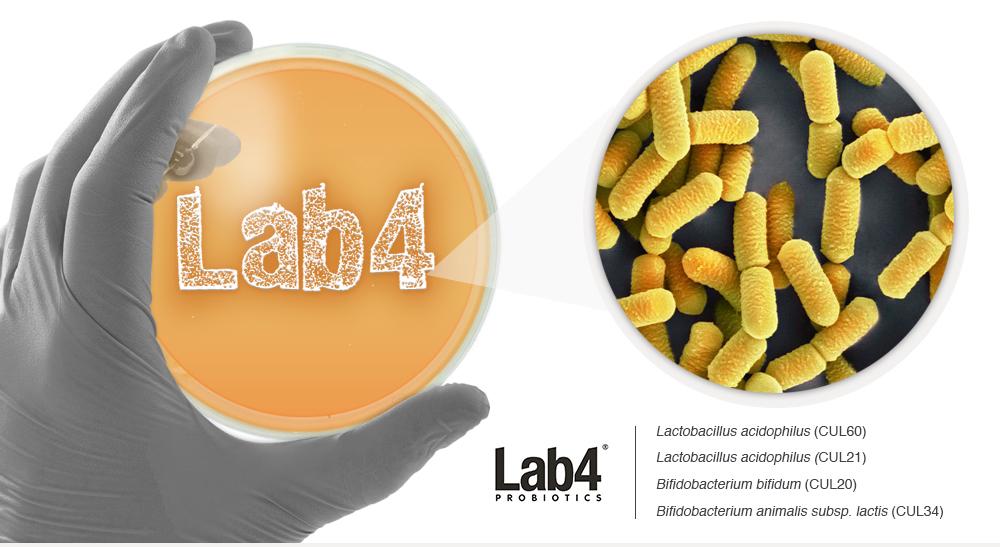 lab4 probiotics studies