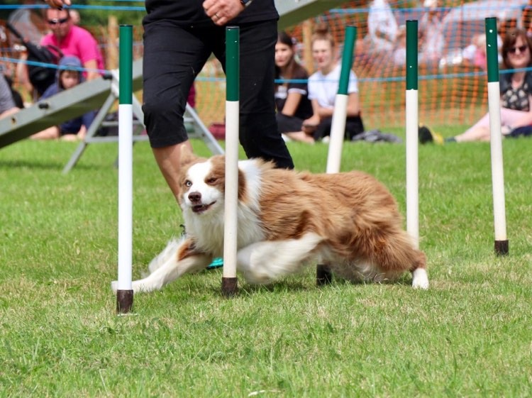 dog agility joint support